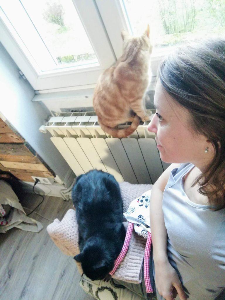 chats et tricot