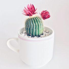 """Podcast créatif #1 - A l'ombre du cactus """"Sortir de sa laine de confort"""""""