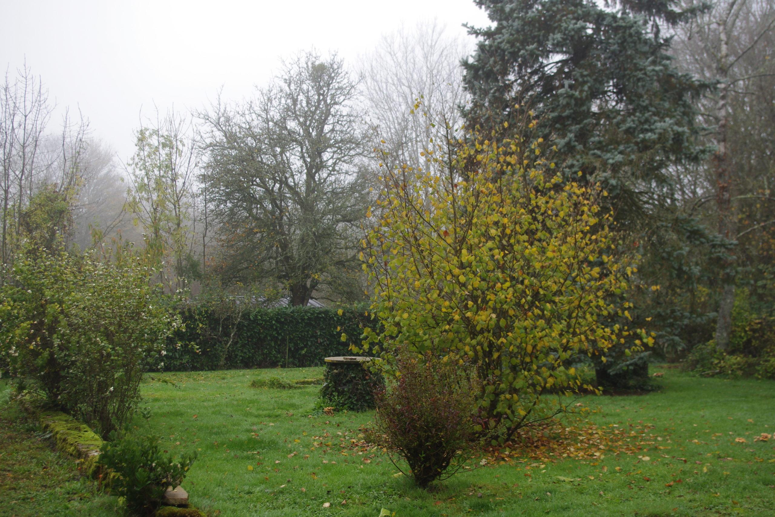 jardin brume